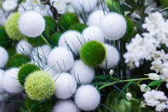 Beautiful fluffy, gently, gracefully plant Stock Image