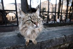 Beautiful fluffy gray cat on the street royalty free stock photography