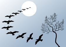Beautiful flying birds stock illustration