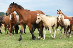 Beautiful foal with mare on pasturage Royalty Free Stock Photos