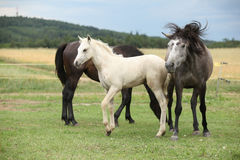Beautiful foal with mare on pasturage Stock Photos
