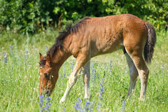 Beautiful foal pasture Stock Photo