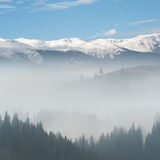 Beautiful Fog in Forest Royalty Free Stock Images