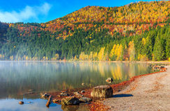 Beautiful foggy autumn landscape with Saint Anna Lake,Transylvania,Romania Stock Images