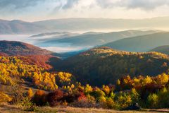 Beautiful foggy autumn landscape. Trees in fall color on a sunny morning in mountains royalty free stock photo