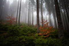 Beautiful foggy Beskidy mountains landscape Stock Photos
