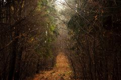 Beautiful foggy calm atmosphere road in the yellow woods on the royalty free stock photos