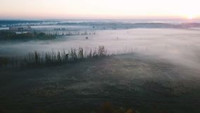 Beautiful foggy countryside cold nature. Field with plants in hoarfrost. Lonely trees. Aerial drone video footage. Top view hypnotizing nature stock video