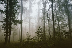 Beautiful foggy forest in autumn Stock Photography