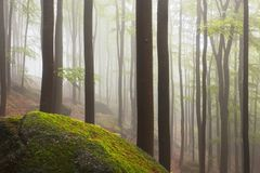 Beautiful foggy forest. Fairy tale spooky looking woods in a misty day. Cold foggy morning in horror forest. stock photos