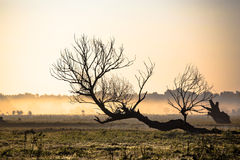 Beautiful foggy landscape. Solitary dead tree in a foggy field Stock Photography