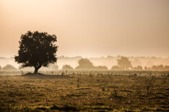 Beautiful foggy landscape. Solitary tree in a foggy field Stock Photos