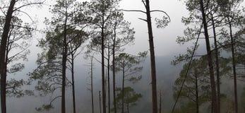 Beautiful foggy morning in summer. stock photos