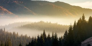 Beautiful foggy scenery in autumn. At sunrise. fog rise above the distant valley and spruce forest on the hill Stock Photography