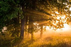 Beautiful foggy spring dawn on a field with trees Stock Image
