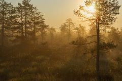 Beautiful foggy and sunny morning in bog area. Golden hour royalty free stock images