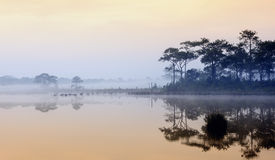 Beautiful foggy sunrise on a lake in rain forest. Stock Images