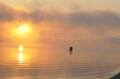Beautiful foggy sunrize on the river. Nature in autumn, Ukraine. Beautiful foggy sunrize on the Dnieper river stock images