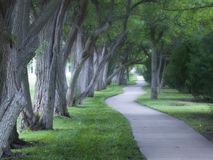 Beautiful Foggy Tree Lined Walking Path On Foggy M Royalty Free Stock Photo