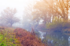 Beautiful foggy weather next to the river. In late autumn Stock Images