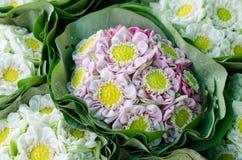 Beautiful folding lotus Stock Image