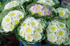 Beautiful folding lotus Royalty Free Stock Photo