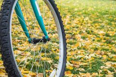 Beautiful foliage as background for a bicycle wheel Royalty Free Stock Images