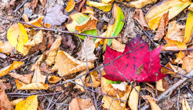 Beautiful foliage colors of New England.  Royalty Free Stock Photos