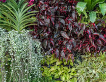 Beautiful foliage garden wall Royalty Free Stock Image