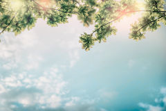 Beautiful foliage over sky background Stock Photography