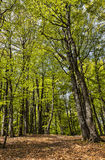 Footpath in a Beautiful Green Forest royalty free stock photography