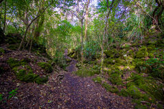 Beautiful footpath inside of a volcanic Rangitoto Island, in a sunny day perfect for hiking Royalty Free Stock Images
