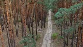 Beautiful footpath in pine forest. aerial survey stock video footage