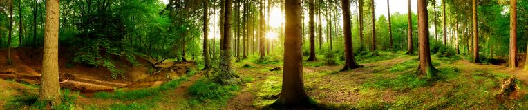 Free Beautiful Forest Royalty Free Stock Images - 100081109