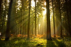 Beautiful Forest. A beautiful forest at dusk Royalty Free Stock Images