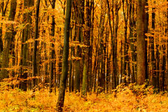 Beautiful forest Stock Image