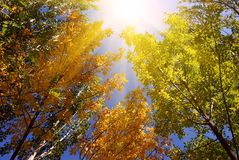 Beautiful forest. With sunny autumn colors royalty free stock photo