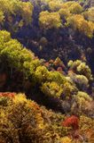 Beautiful forest aerial view Stock Image