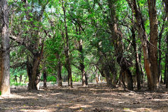 Forest Almaty kazakhstan Royalty Free Stock Photography