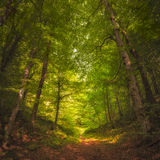 Beautiful forest along the pathway Stock Images