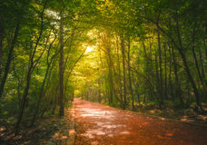 Beautiful forest along the pathway Stock Photography
