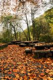 Beautiful forest area. View of beautiful autumn forest park on Monchique, Portugal Stock Photos