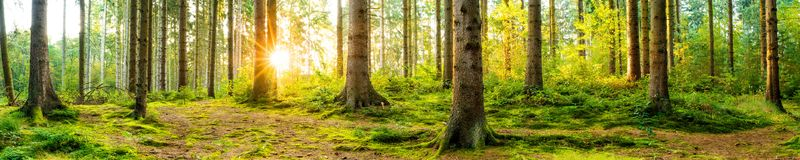 Beautiful Forest At Sunrise Stock Image