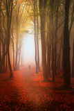 Beautiful forest during autumn Stock Photos