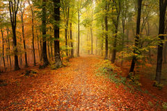 Beautiful forest during autumn Royalty Free Stock Photo
