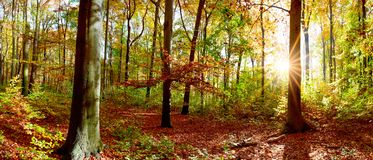 Beautiful forest in autumn royalty free stock photos