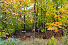 Beautiful forest in Autumn. The Beautiful forest in the fall Stock Photo