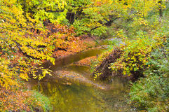 Beautiful forest in Autumn. The Beautiful forest in the fall Stock Photography