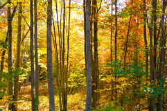 Beautiful forest in Autumn Stock Images