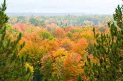 Beautiful forest in Autumn Royalty Free Stock Photo